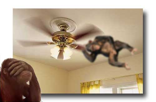 ceiling-fan-monkey framed copy
